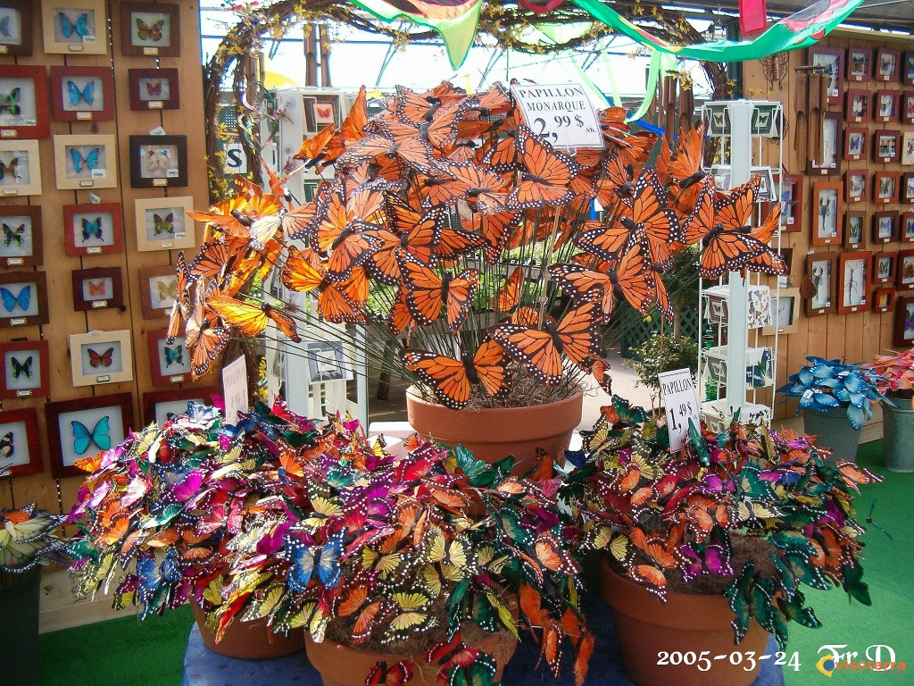 Photo papillons en f te qu bec for Papillon centre jardin hamel 2016