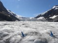 Athabasca glacier et Columbia icefield