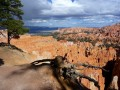 Les pins de Bryce Canyon