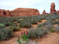 Panorama d'Arches National Park