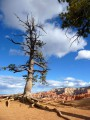 Pin de Bryce Canyon