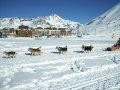 Mushing  à Tignes
